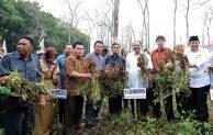 Menteri Puspayoga Panen Kacang Tanah Lewat Kemitraan Petani dan Usaha Besar