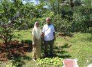 BUMDes Bebaskan Petani Jambu Getas Merah di Kab Kendal dari Jeratan Tengkulak