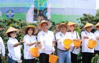 BNI Smartfarming, Kembalinya Kejayaan Kopi Sidikalang – Dairi