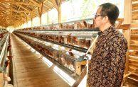 Meninjau Peternakan Ayam dan Pengolahan Rajungan, LPDB KUMKM Siap Salurkan Dana Bergulir