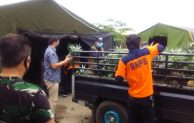 Koperasi Singgalang Sari Maju Sumbang Nenas Bagi Tenaga Medis Covid-19