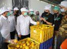 MenkopUKM Perkuat Kemitraan Koperasi Dengan TaniHub Dalam Menyerap Hasil Pertanian