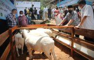 MenkopUKM Dukung Korporatisasi Peternak Domba di Garut