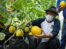 MenkopUKM Fokus Pengembangan Model Bisnis Sektor Pertanian