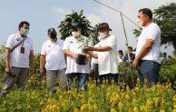Sinergi KemenkopUKM dan IPB Kembangkan Model Bisnis bagi Petani Tanaman Hias Bogor