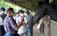 Peningkatan Kualitas Kuda Pacu Lokal Akan Mampu Tingkatkan Kesejahteraan Peternak