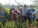 KemenkopUKM Bangun Koperasi Moderen dan Jadi Offtaker Produk Pertanian di Subang